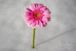 Blommor & växter73