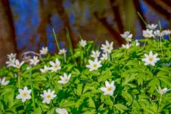 Blommor & växter76