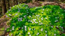 Blommor & växter77