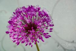 Blommor & växter78