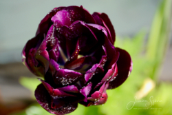 Blommor & växter 079