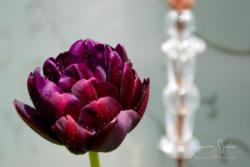 Blommor & växter80