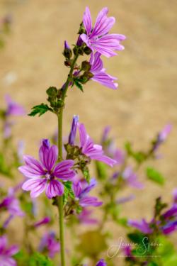 Blommor & växter81