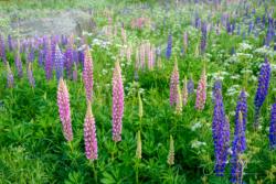 Blommor & växter 083