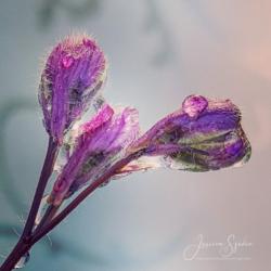 Blommor & växter 086