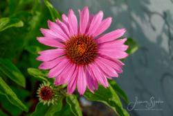 Blommor & växter90