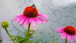 Blommor & växter91