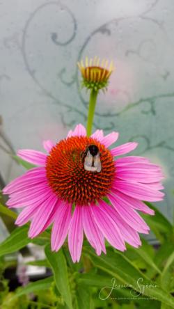 Blommor & växter92