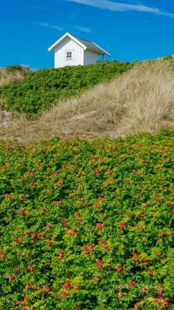 Blommor & växter94