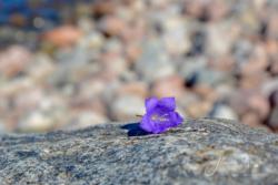 Blommor & växter 095