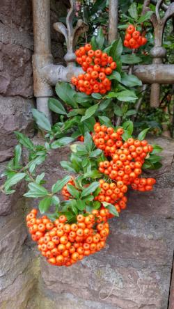 Blommor & växter 099