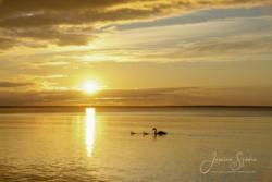 Solnedgångar11