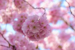 Blommor & växter 101