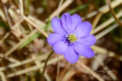 Blommor & växter 133