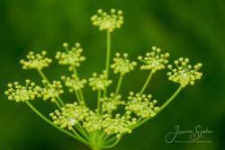 Blommor & växter 111