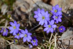 blommor& växter 134