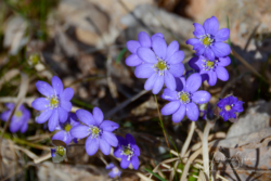 Blommor & växter 134
