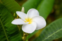 Blommor & växter 123