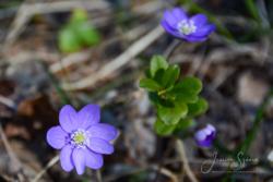 blommor & växter 135