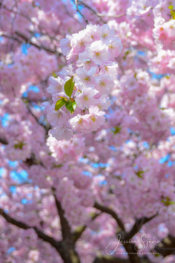 Blommor & växter 107