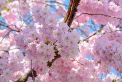 Blommor & Växter 104