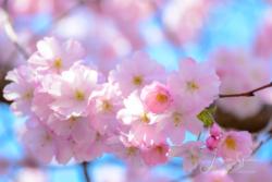 Blommor & växter 109
