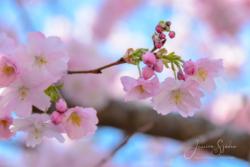 Blommor & växter 103