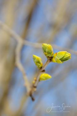 Blommor & växter 130