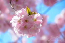 Blommor & växter 105