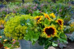 Blommor & växter 116