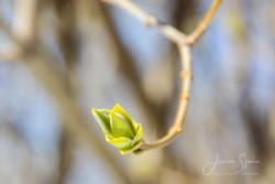 Blommor & växter 125