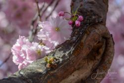 Blommor & växter 102