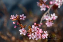 blommor & växter 128