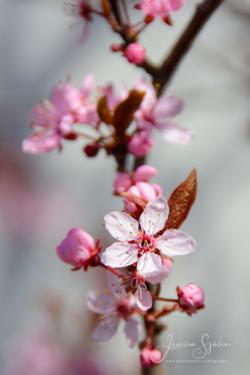 Blommor & växter 131