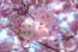 Blommor & växter 108