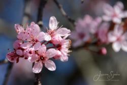 Blommor & växter 127