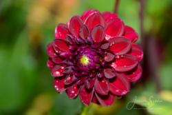 Blommor & växter 110