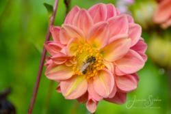 blommor & växter 113