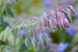 Blommor & växter 117