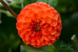 Blommor & växter 112