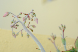 Blommor & växter 140